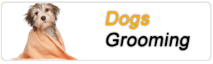 Dogs Grooming Parlour